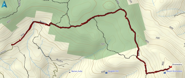 Dromedary track