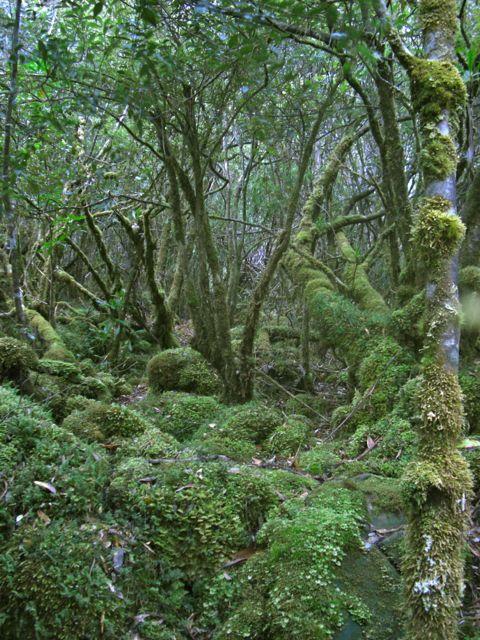 Macgregor forest