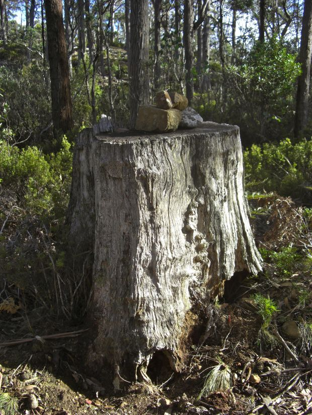 Cairn on tree stump