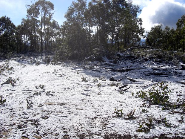 Little bit of snow? 200 metres from the summit, at the road clearing. Off track from here.