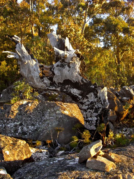 And an old old bit of tree on the summit
