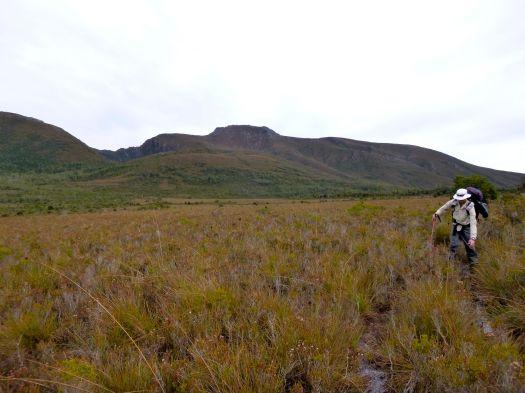 Button grass plains, Schnells Ridge behind