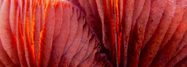 Mushroom colours :)