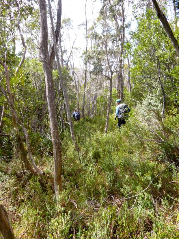 Heading into the scrub eagerly.. time to redeem ourselves