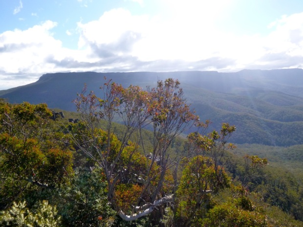 View towards the Ben Lomond plateau from the top