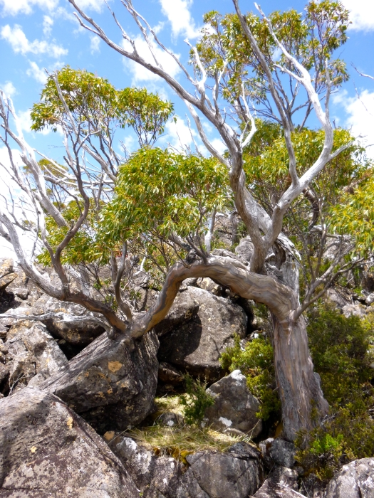 Scrub gives way to rocks and trees, and what a cool tree this is, leaning on one shoulder ;)