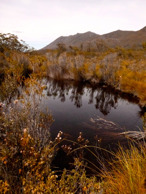 A tarn, turquoise dragonflies, and more of those mountains and button grass