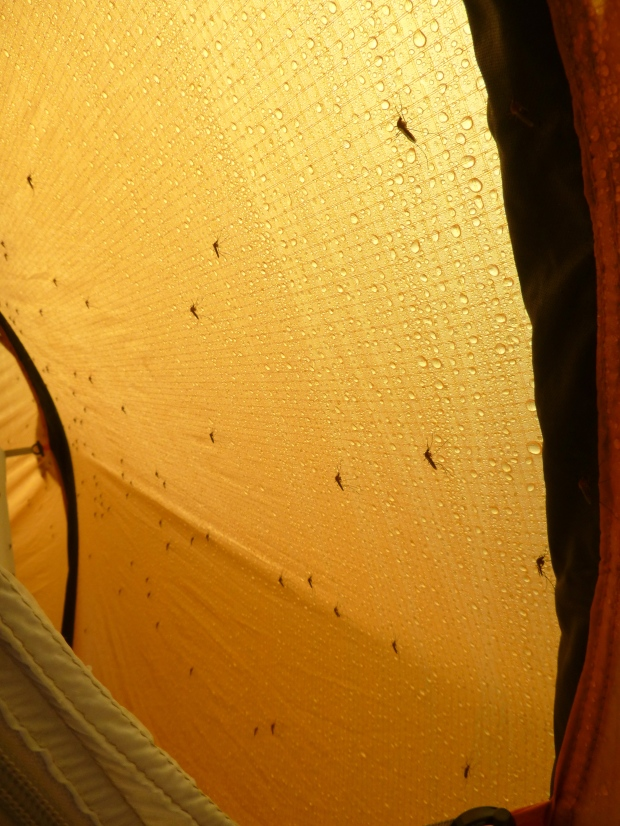 Just a few of the mozzies who insisted on keeping us company!