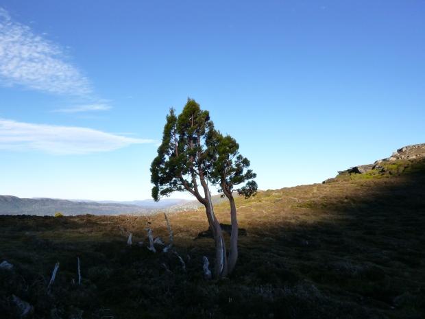 Near camp, on the Ossa-Paddy's Nut saddle
