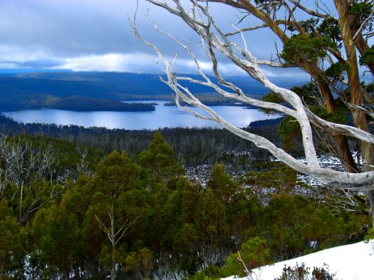 Loved the snow gums, dead and alive, each time I was here