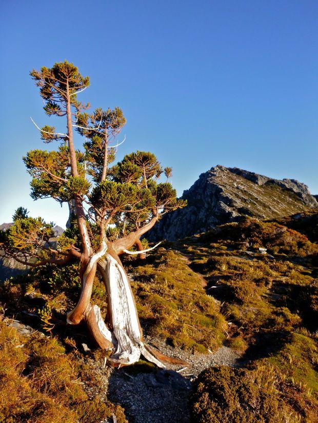 'My' tree :)
