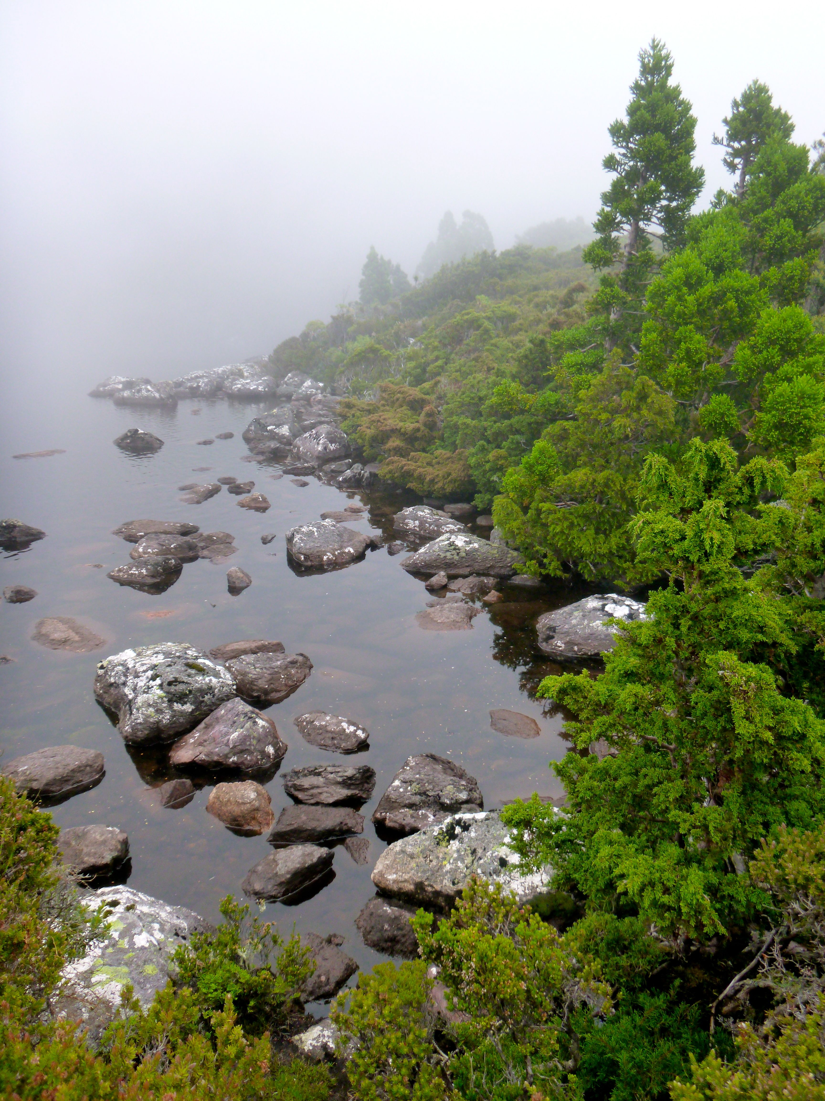 Paddys Lake on the way up, perfect beauty hidden and revealed as desired by the cloak of mist