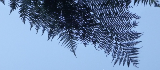 Lying on the ground looking up at the big trees, and ferns blacked out against the sky