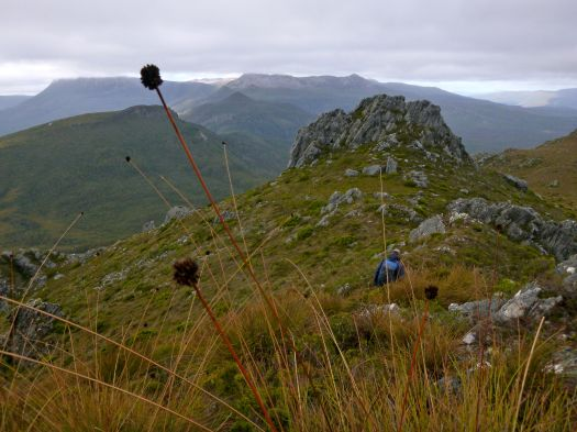 Heading back down.. have to have a button grass shot.. and Mt Field NP.