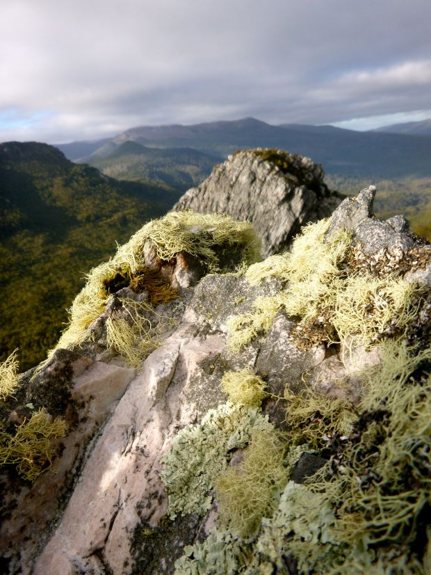 Lichen on top of the rock, and Tim Shea (left) and Mt Field NP