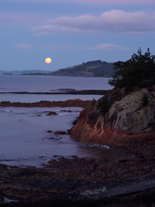 The moon rose in its place, a super moon I've just been told, low and big.. orangey at first, then whiter the higher it got
