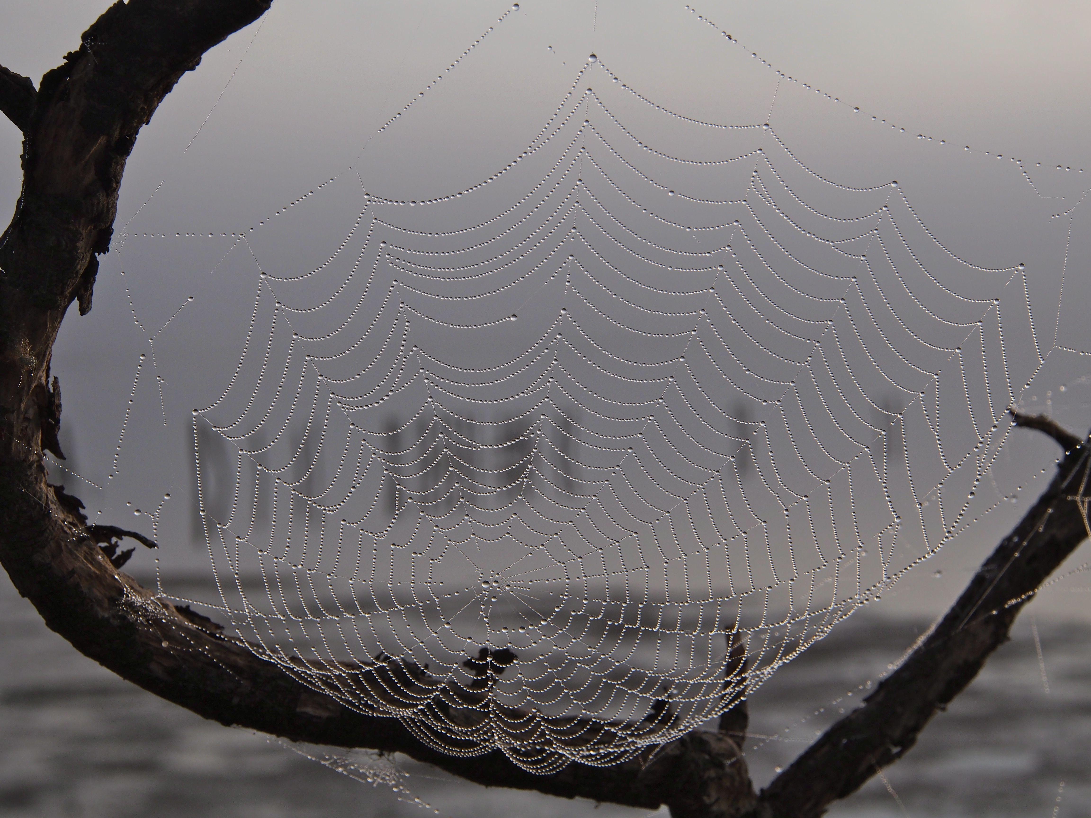 The spiderwebs were beautiful