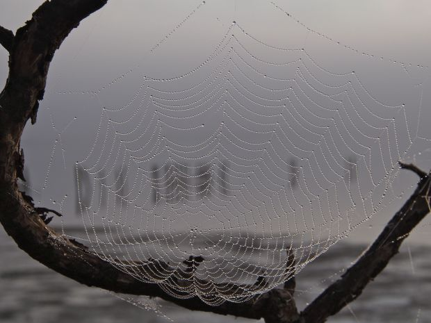 The spiderwebs were beautiful