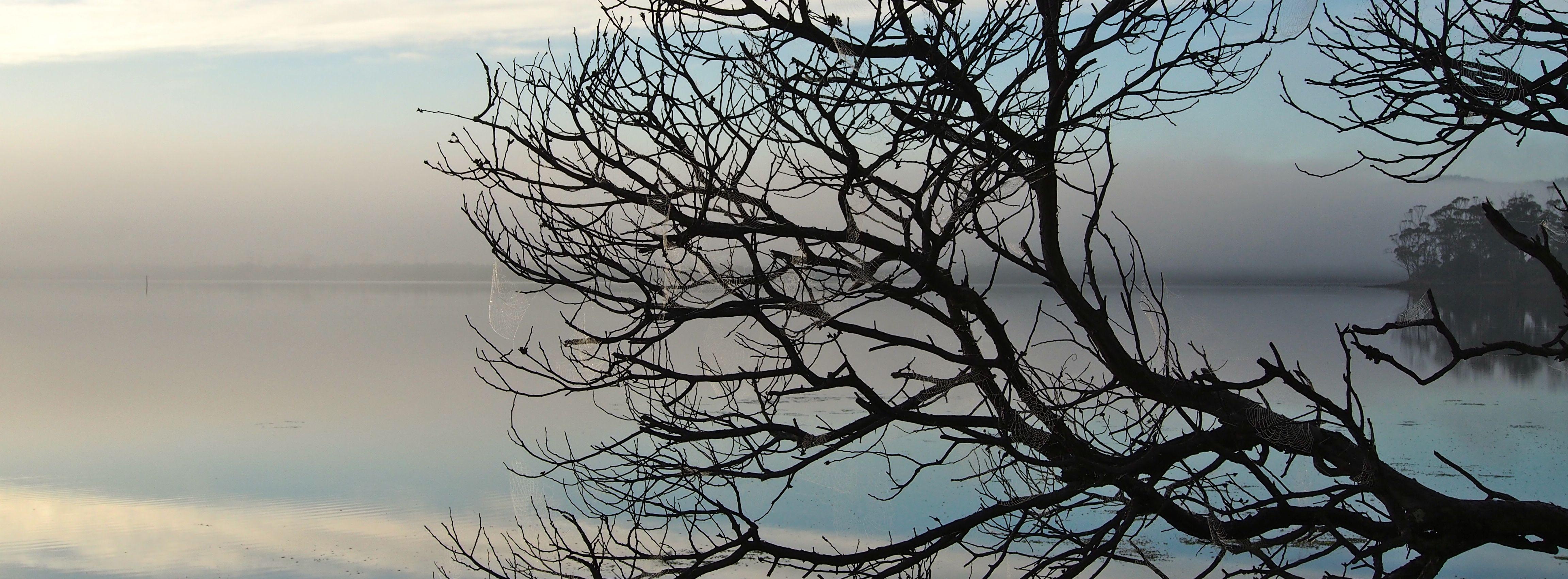 Tree, cobwebs, mist in the morning.