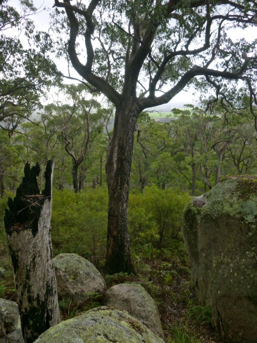 Heading up through forest and rock, to Mount Cameron