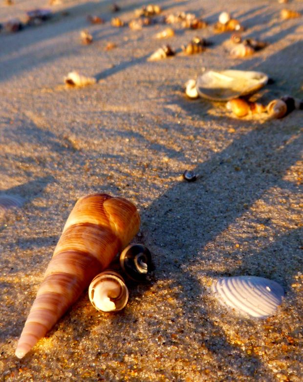 The sun is finally up, warming us all, and casting long shadows behind even the smallest of shells..
