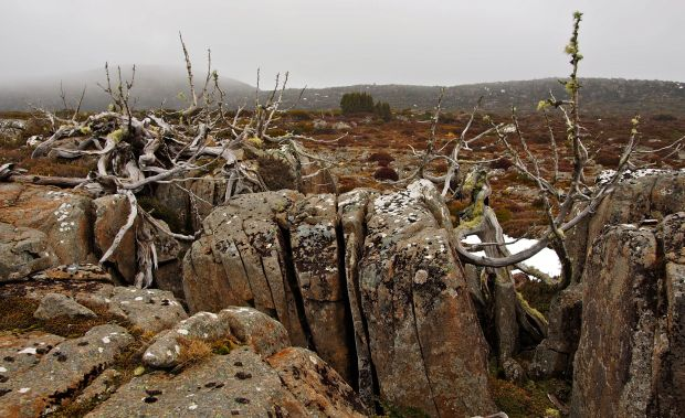 Love pine skeletons and rock..