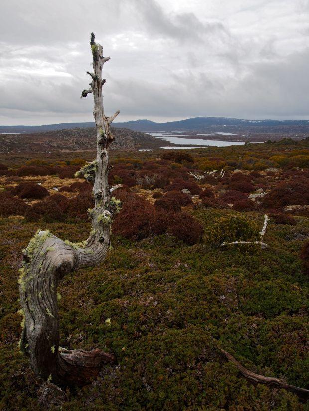 A Leunig kind of tree.. nice and curly