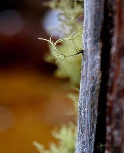 Little bit of lichen..