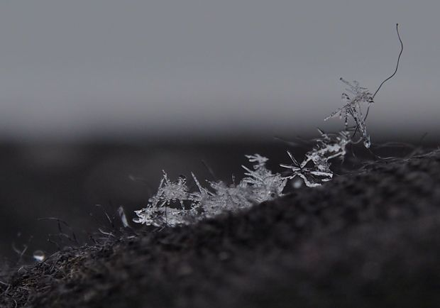 Ever wondered what snow flakes look like close up?