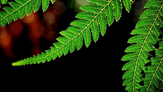 Sun shining through fern leaves. I couldn't walk past..