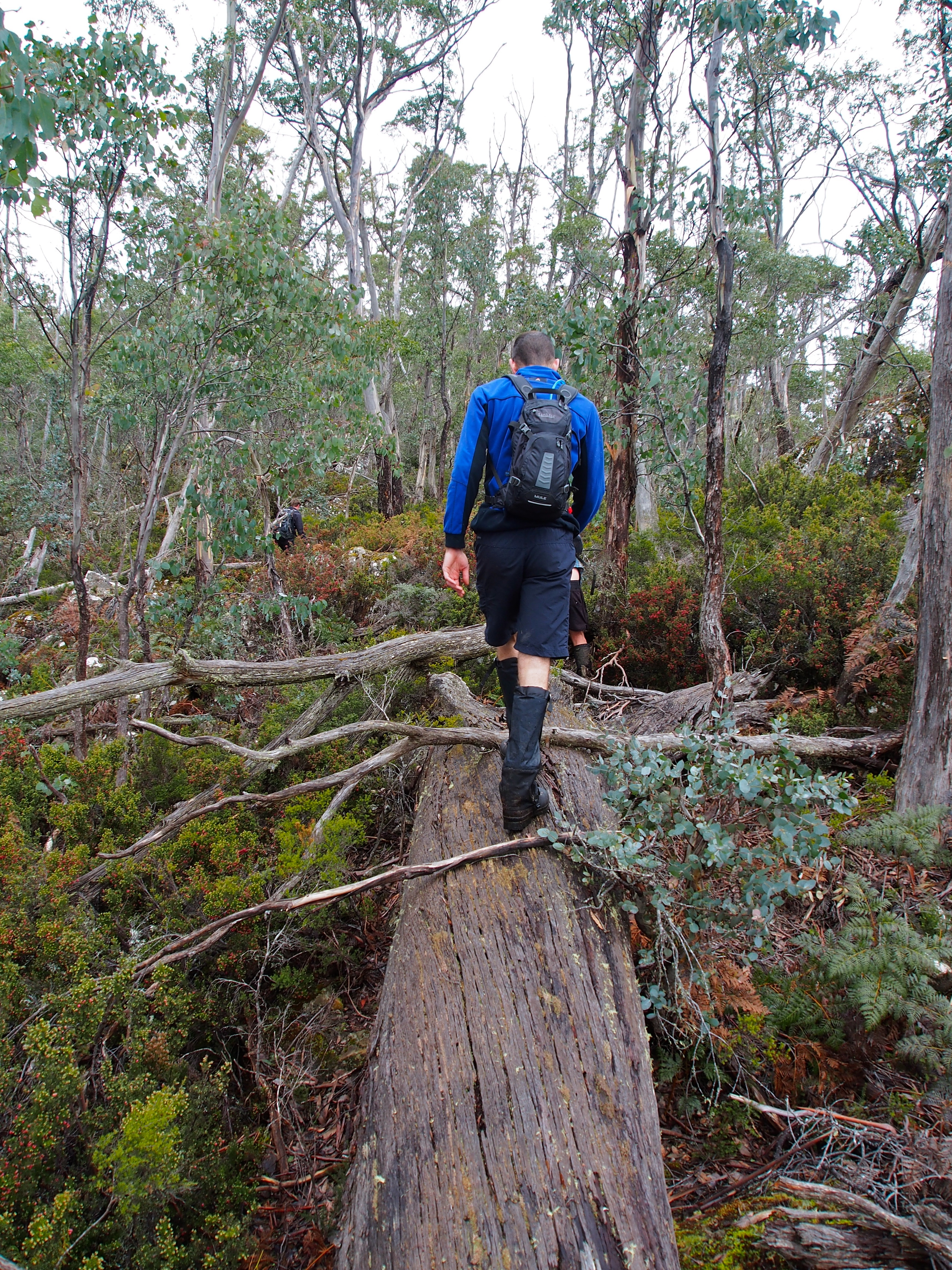 A few slippery tree trunks to walk along. Mike shows how it's done!