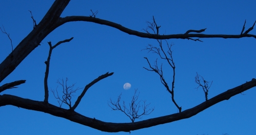 Two days off being a super moon.. was pretty super to me anyway..