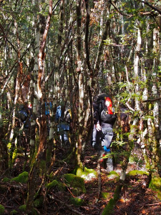 The scrub wasn't so bad at all really! Heading up through quite open forest.
