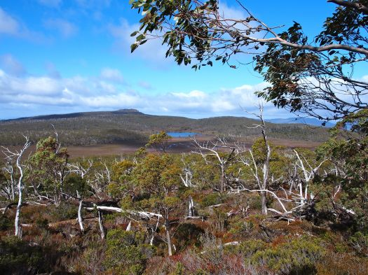 View towards Wentworth Hills from D'Arcy's Bluff