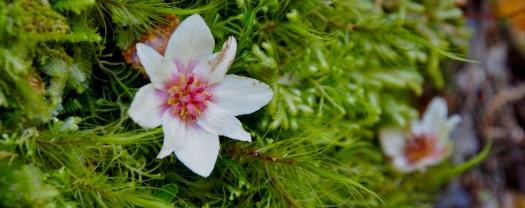 The sassafras flowers have fallen..
