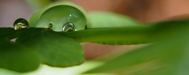 A droplet with character.. who says you have to be perfectly round?