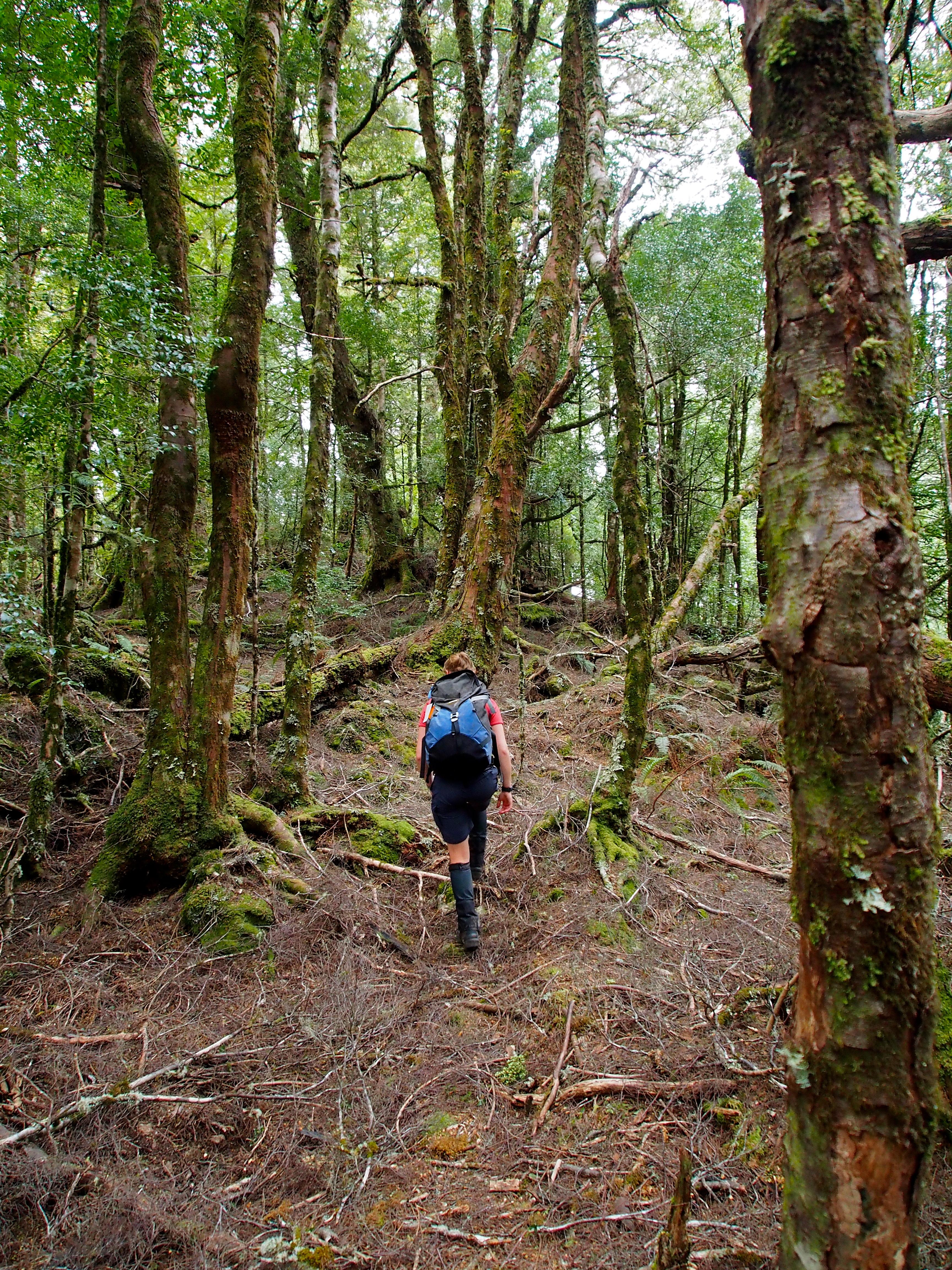 Jess walking in Mt Charter forest