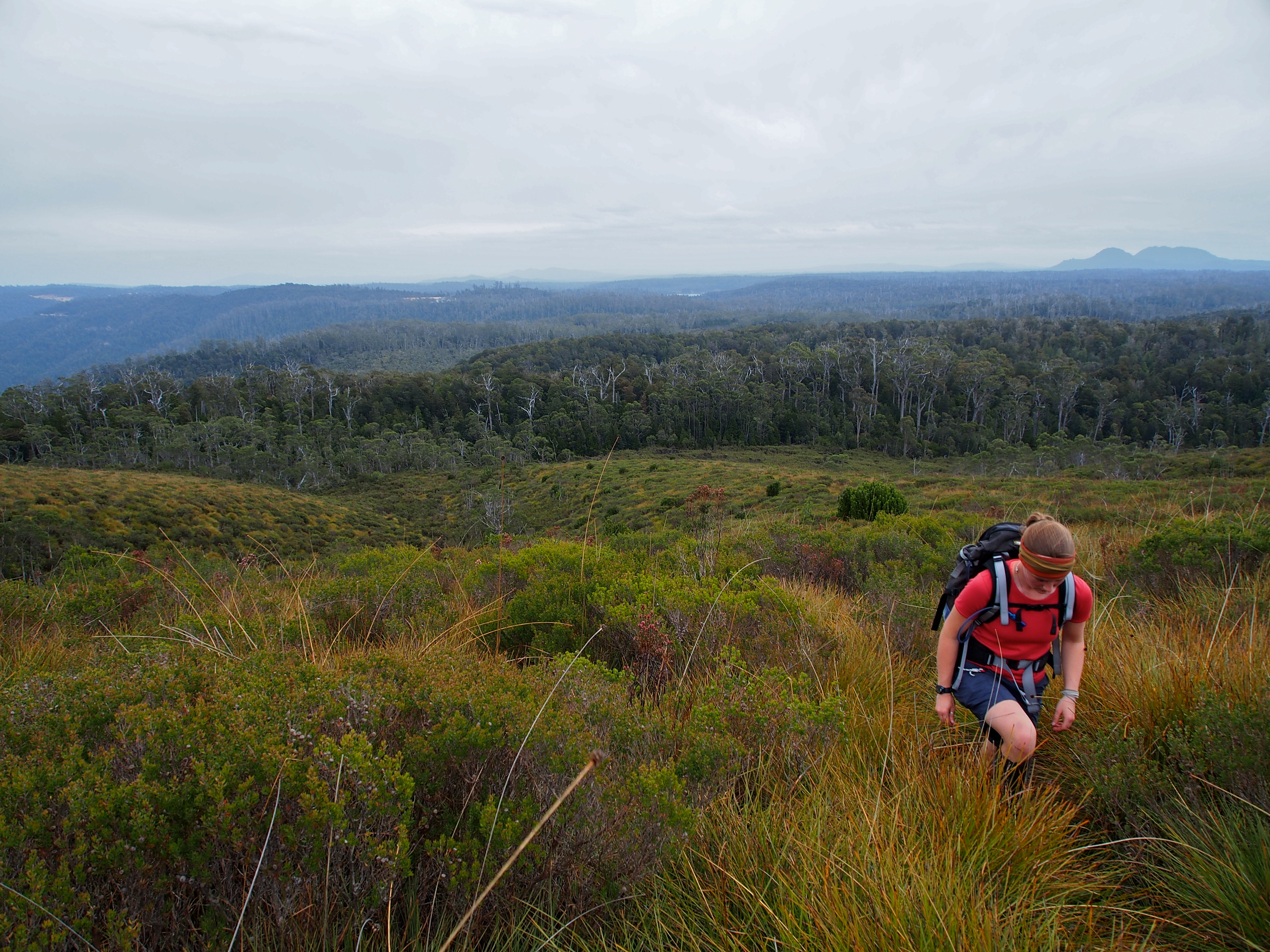 Out of the forest and onto the button grass ridges