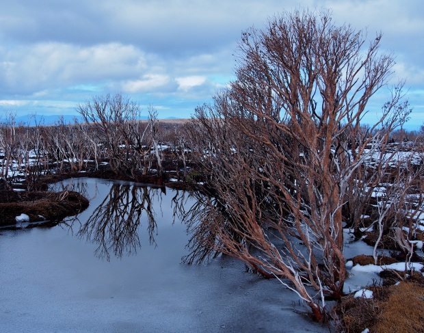 Trees and reflections in icy water