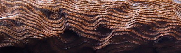 Patterns in pine