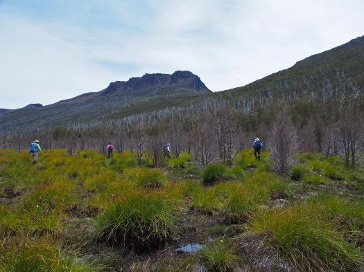 Off the Cuvier Valley track, we head for the trees