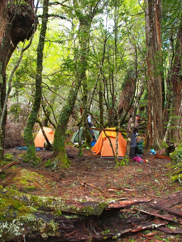 Geryon South campsite.. not bad for a forest camp