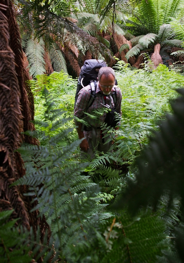Open forest and easy to negotiate ferns exceed our scrubby expectations.