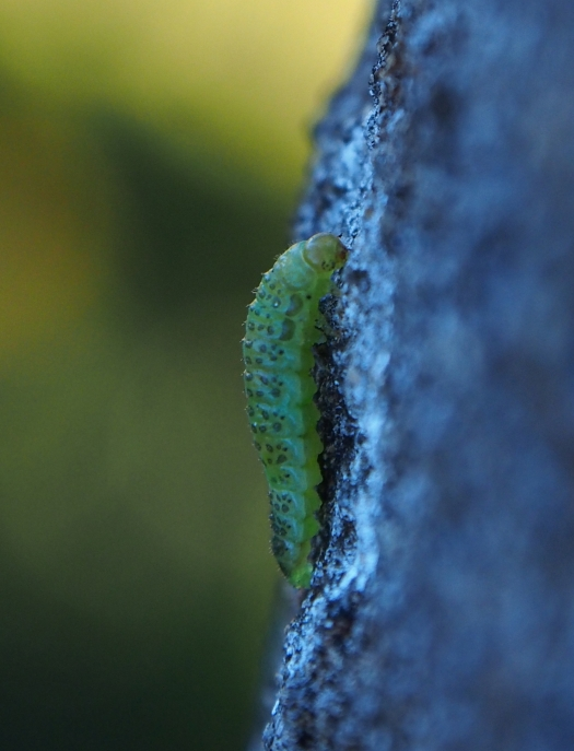 Hungry little caterpillar