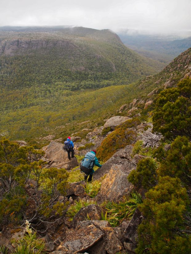 Day 7: Back to reality time :(. We head down the gully selected the day before, and, following Graham's fine nose, pick a relatively easy path through the scrub, popping out onto the Overland Track at Du Cane Gap.