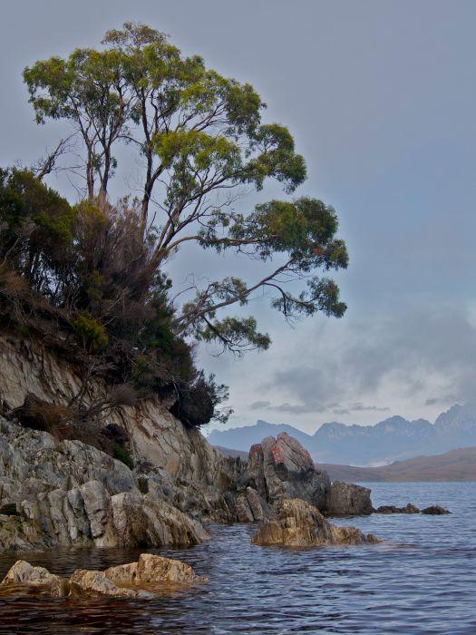 A tree, rocks, and the Western Arthurs.