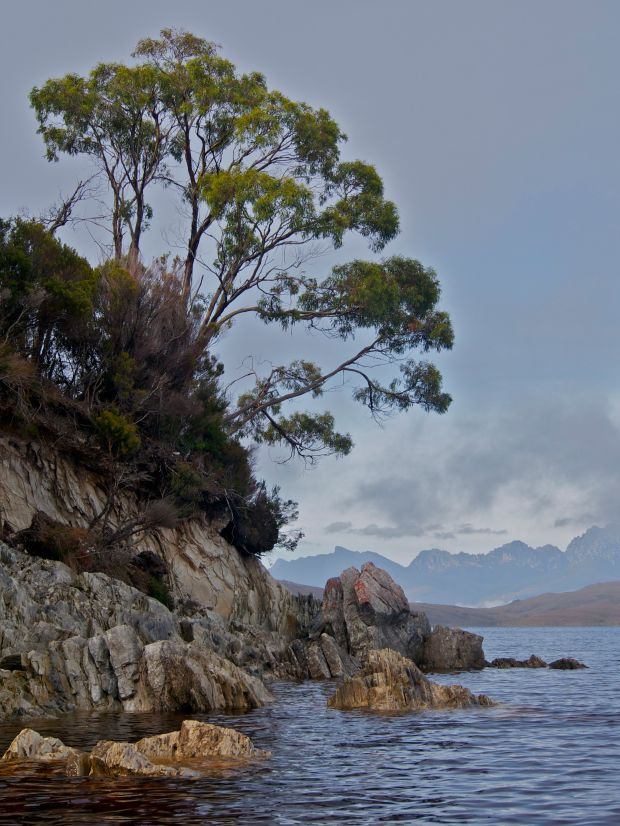 A tree, rocks, and the Western Arthurs.