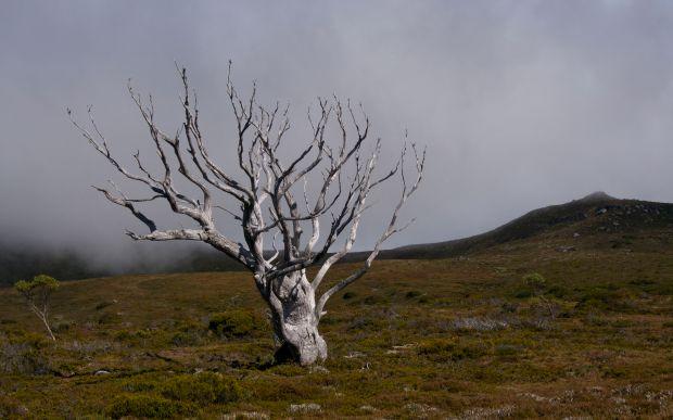 The tree.. no words needed