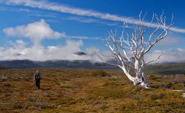 More tree :)