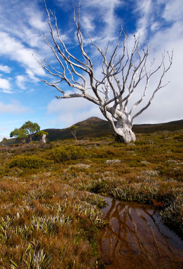 One more tree shot.. now that the cloud had cleared from Goulds Sugarloaf!